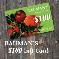 $100 Bauman Gift Card