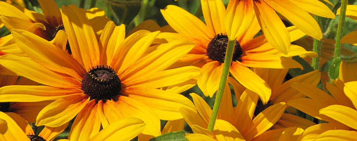 Garden Center - Plant Flowers