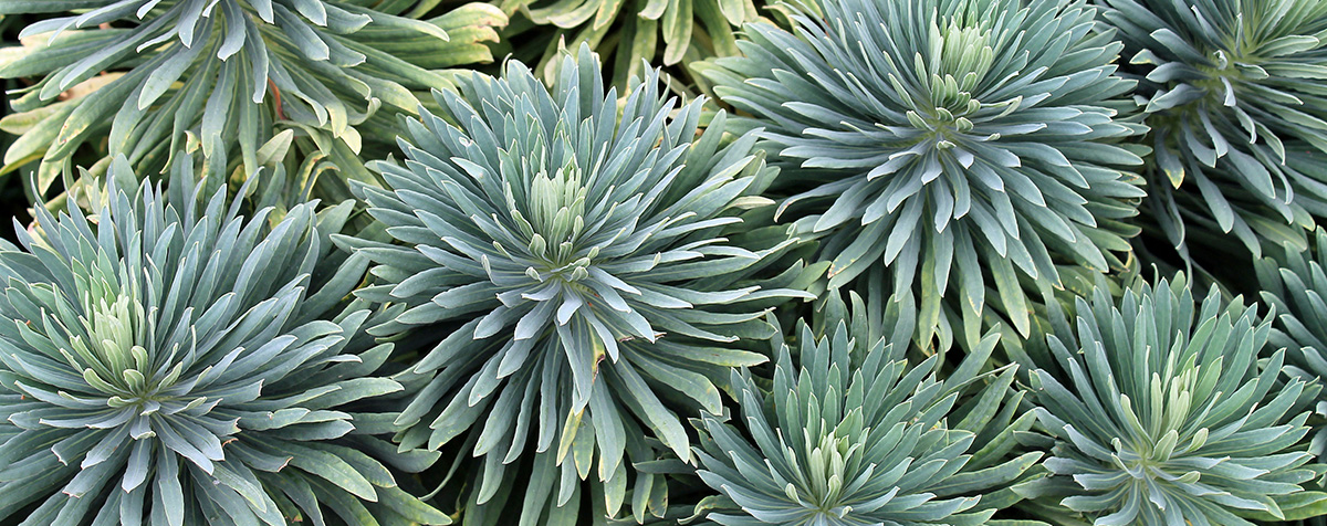 Succulents - Garden Center