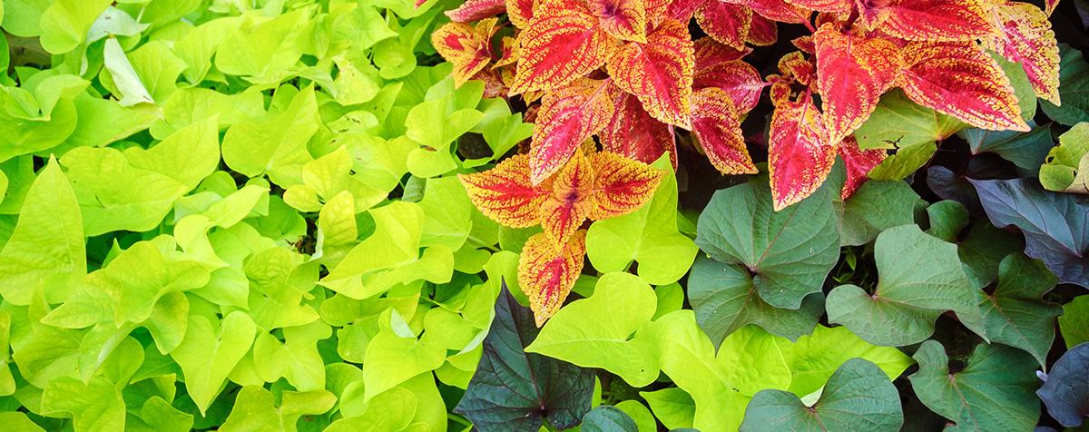 Garden Center - Plants