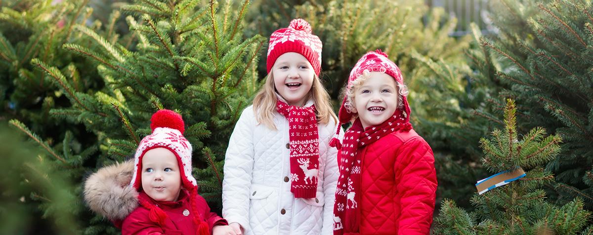 Christmas Trees - Holiday Season