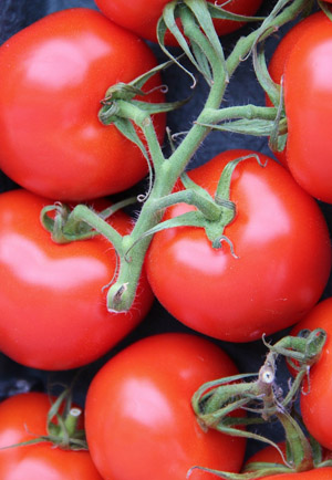Choosing the Right Tomato