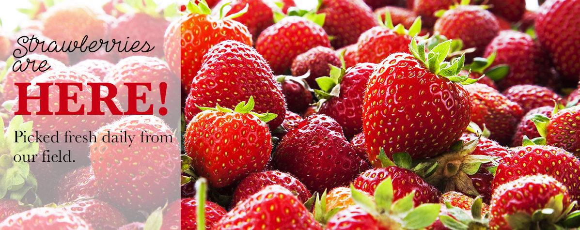 Strawberries are Here!