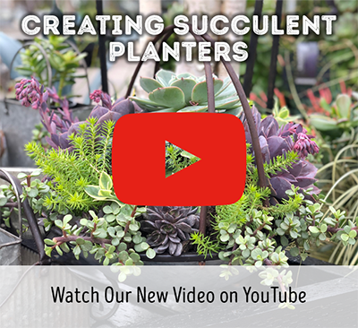 Creating Succulent Planters Video