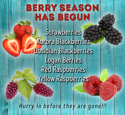 Berry Season - Strawberries, Blackberries, Raspberries