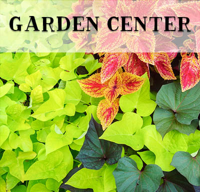 Garden Center - Nursery - Bauman's Farm and Garden