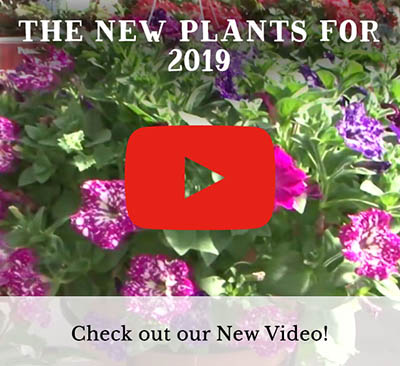 New Plants for 2019 - YouTube Video