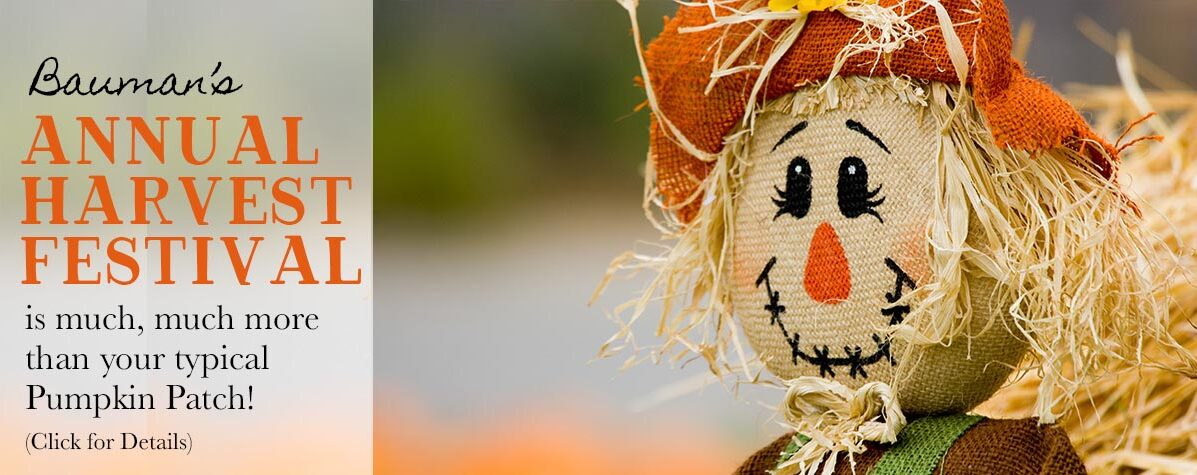 More Than a Pumpkin Patch - Bauman's Harvest Festival