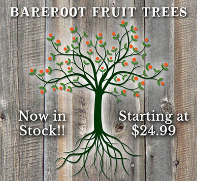 Bareroot Fruit Trees