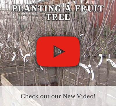 Planting a Fruit Tree