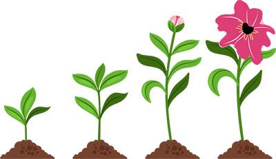 Growing Flower Plants