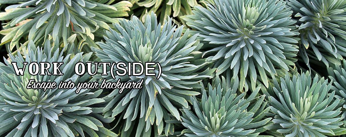 Garden Center - Succulents