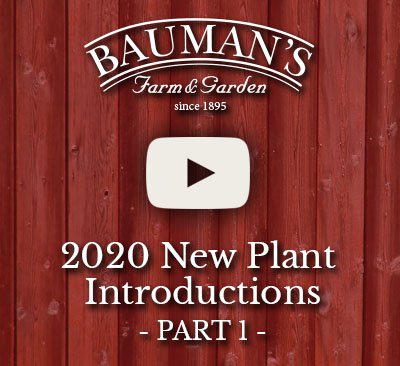 2020 New Plant Introductions Part 1
