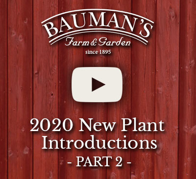 2020 New Plant Introductions Video Part 2