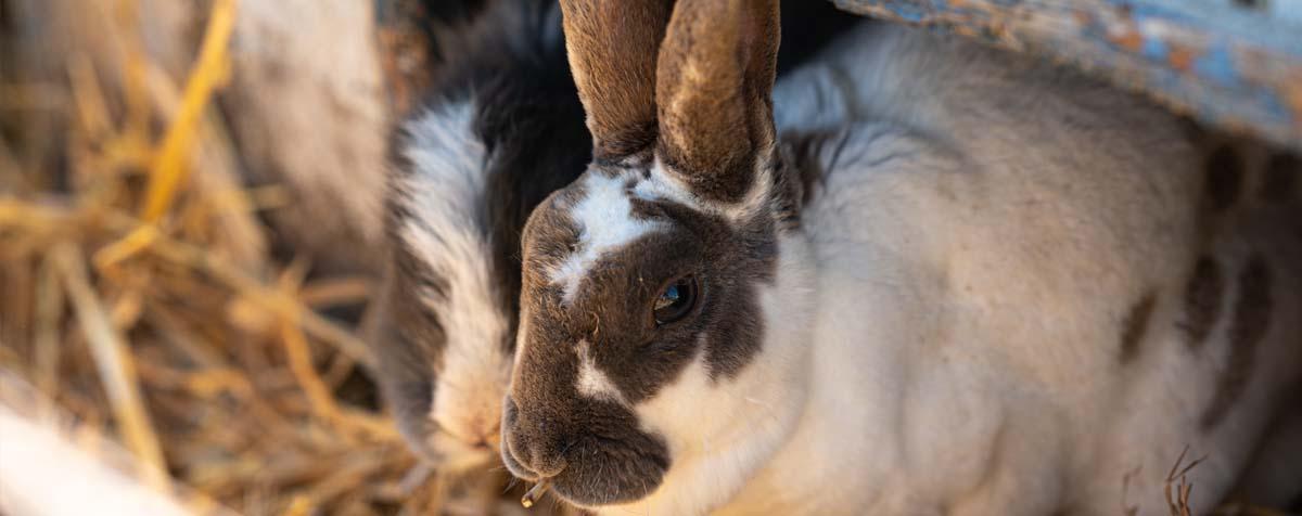 Petting Zoo Bunnies