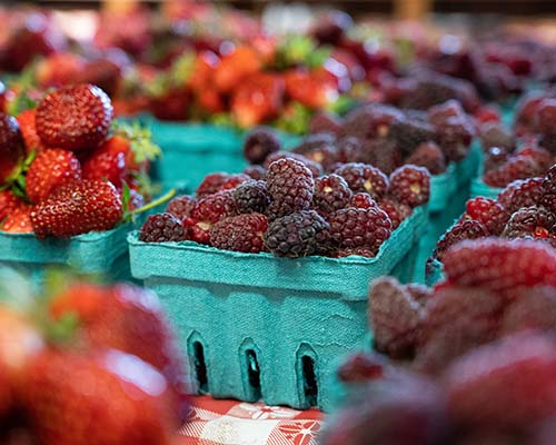 Loganberries & Tayberries - Delicious Berries